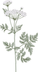 Botany_edited.png