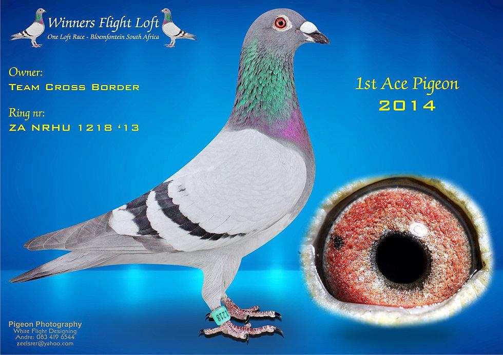 Ace Pigeon 2014