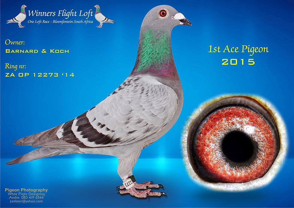 Ace Pigeon 2015