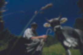Presidio-Slow-Fod-razza-grigio-alpina.jp