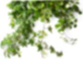 klätterplanta_2.jpg
