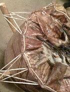 STITCHING SKIN (Antelope/Deer)
