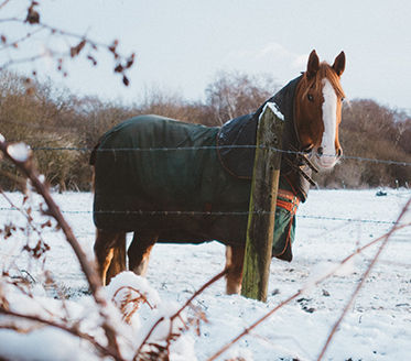 Horse Rugs.jpg