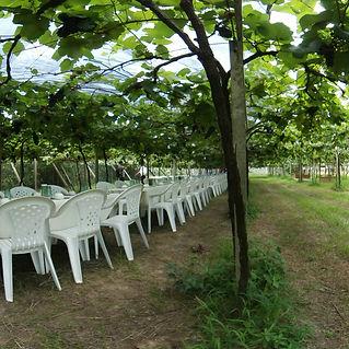 酒堡庄果樹下餐桌720環景圖