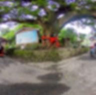 內城社區百年老樹720環景圖