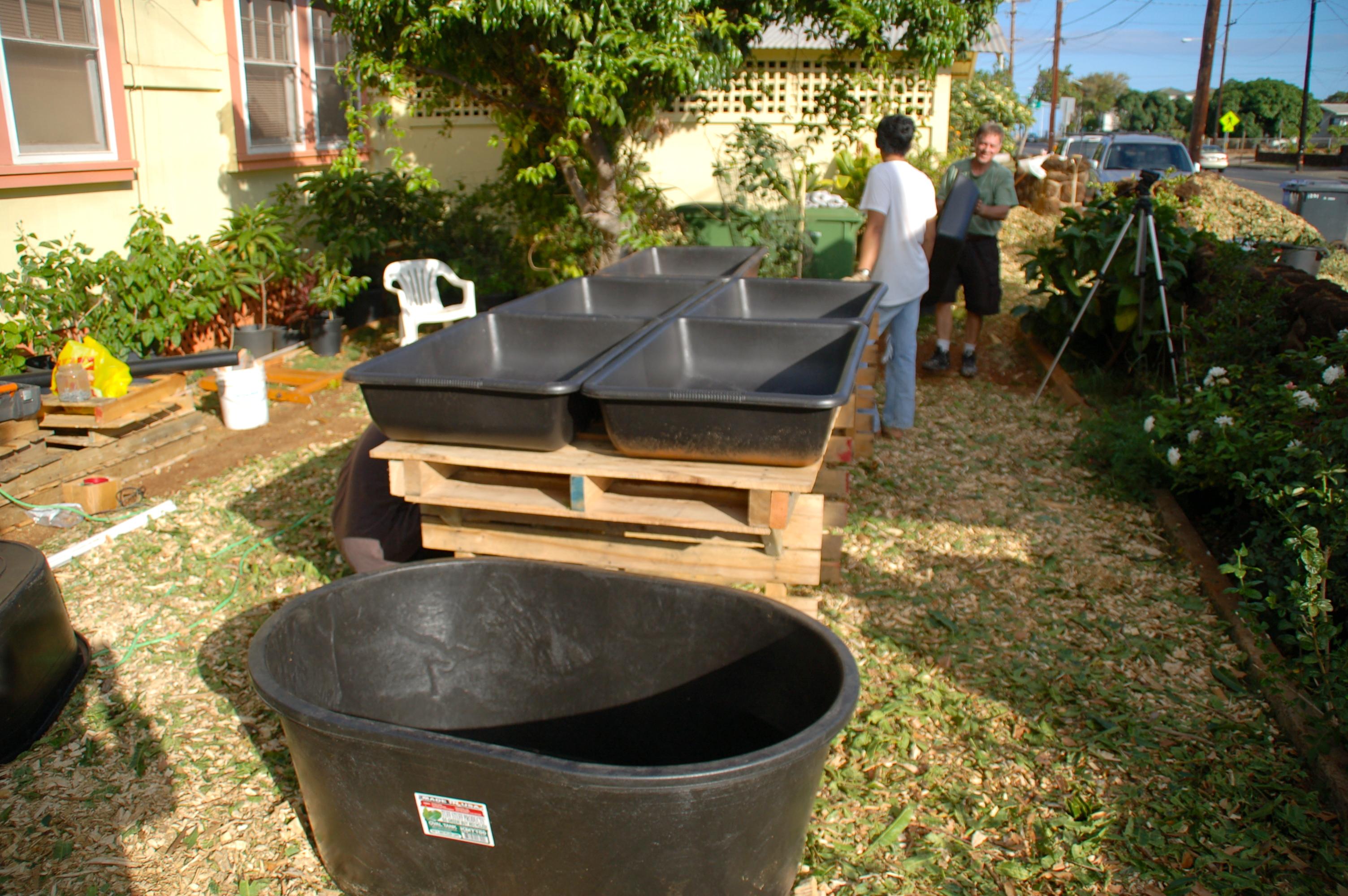 Aqua tanks december 2015 for Aquaponics hawaii