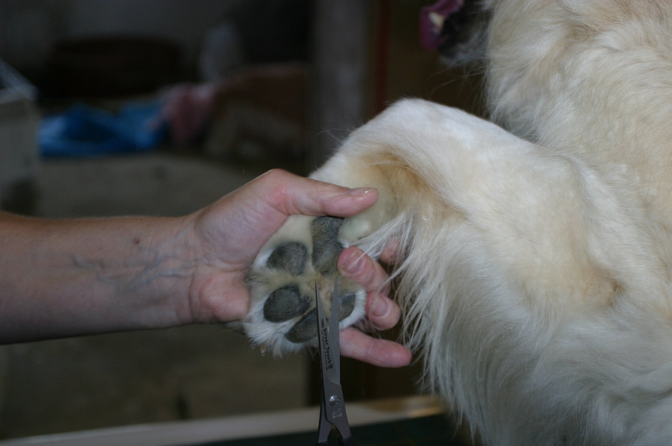 West country dog grooming 009g solutioingenieria Images