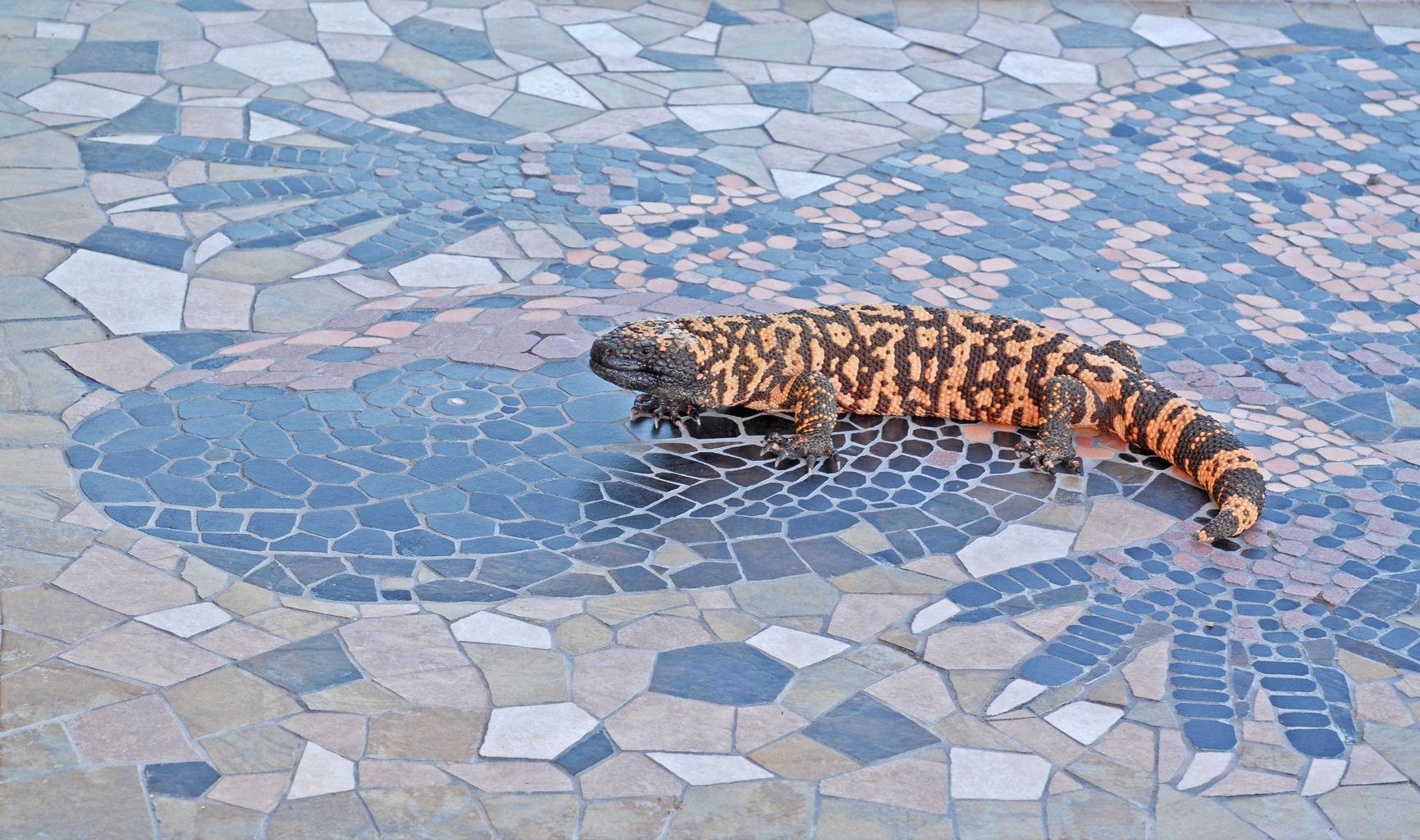 CDM sidewalk art by Tell Hicks, C, tweaked.jpg