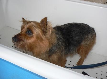 Jessie - After Hydrobath