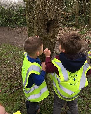 looking at trees.jpg