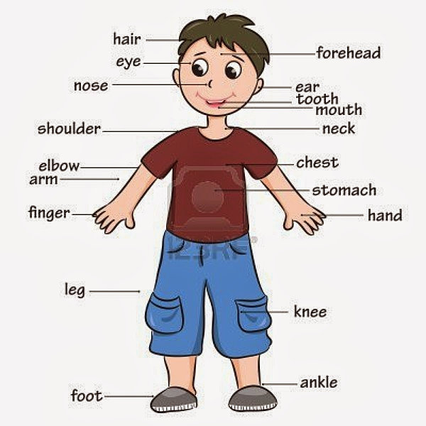 What body parts start with