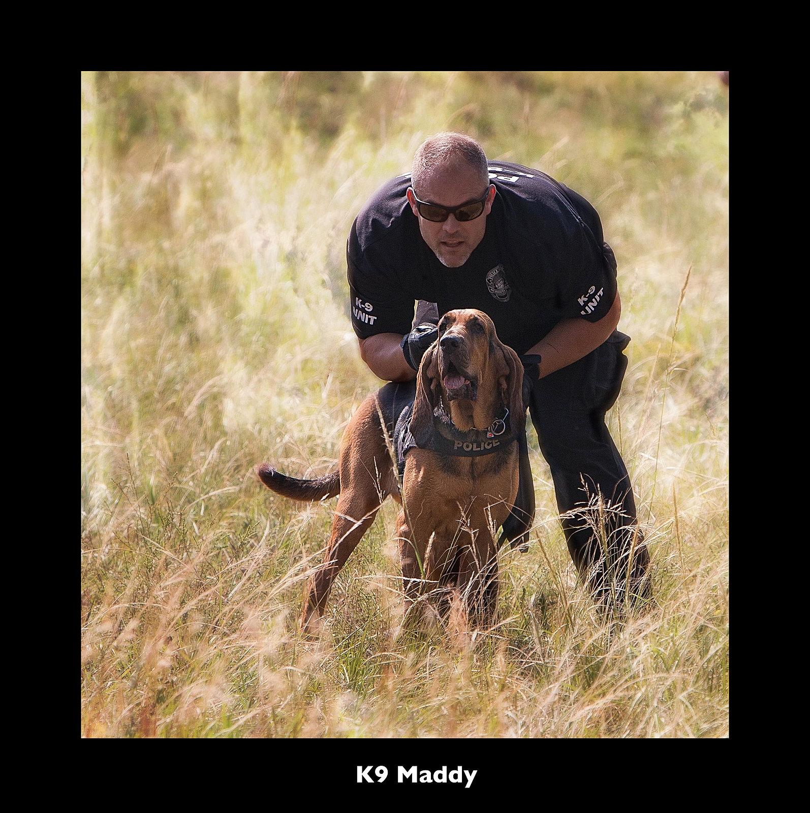 Canine Training Academy. Bloodhound Training, Tracking ...