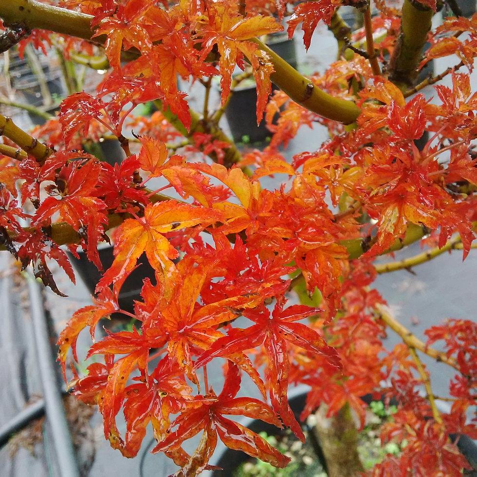 Vendita piante on line per il giardino piante da vivaio for Vendita piante da giardino