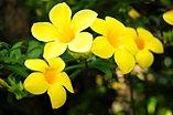 Hoa Huynh đệ