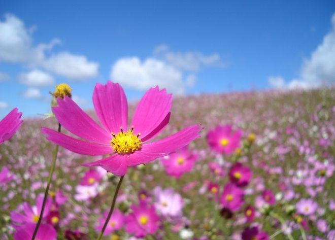 imagens-de-flores-do-campo-9.jpg