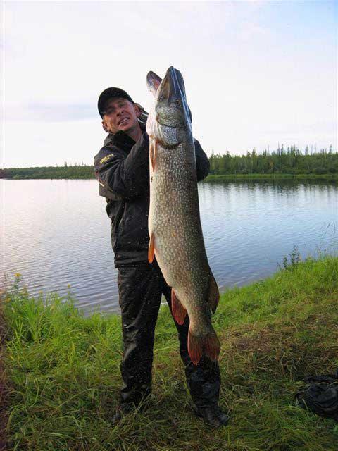 живец для рыбалки в сургуте