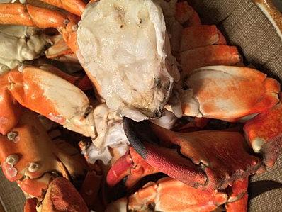 Payam Nub's Rock Crab