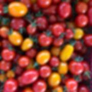 ミニトマトのご注文いただきました!_総勢6kgです。_#ミニトマト#ミニトマト狩