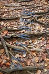ds_woods12