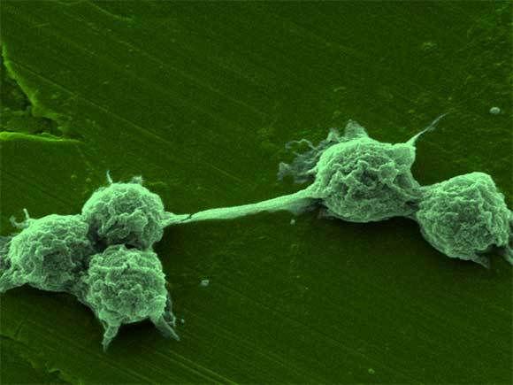 microorganisms euglena