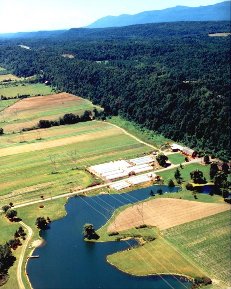Black Horse Farms Wholesale C Horse Farms