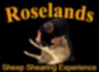 Roselands Sheep Shearing Experience