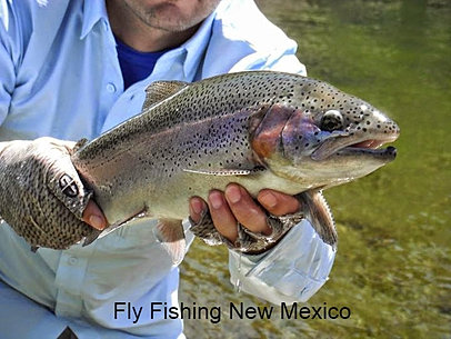 Eagle nest fly shack fly fishing new mexico providing for Red river new mexico fishing