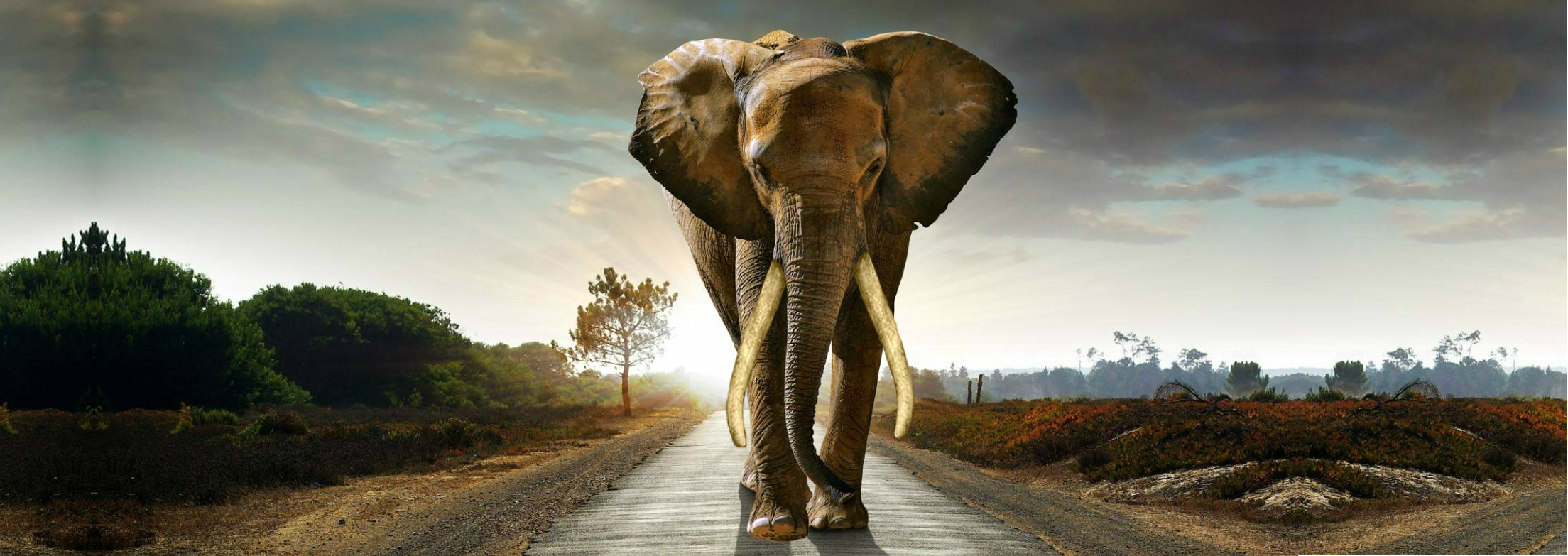 March For Elephants | Saving The Elephant From Extinction