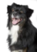 adorable-animal-canine-cute-220938.jpg