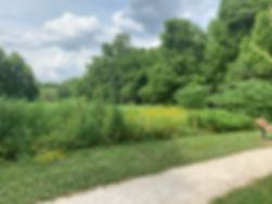 meadow bloom.jpg
