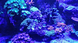 Aquarium installation, aquascaping, maintenance, cleaning, sussex