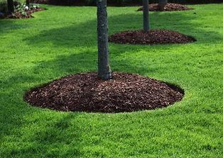 mulch-1-768x545.jpg