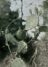 Hunts cactus color.jpg