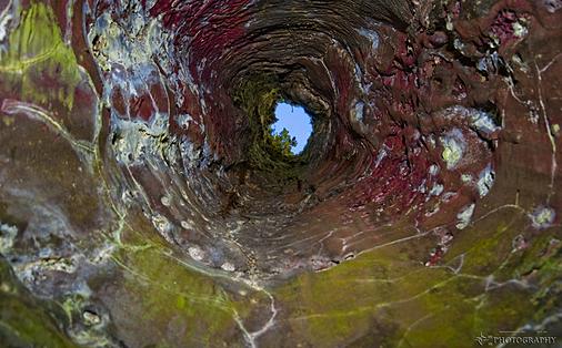 Inside lava tree