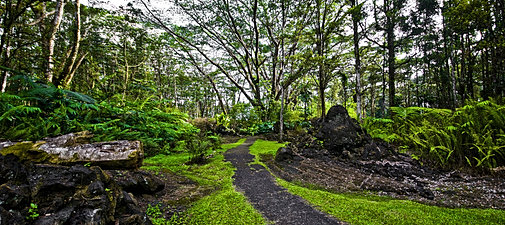 Lava Tree Trail