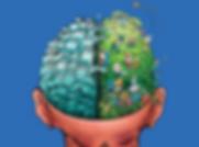 hersenen.png