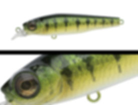 021_yellow_perch.jpg