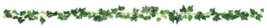 Plantita_edited.jpg