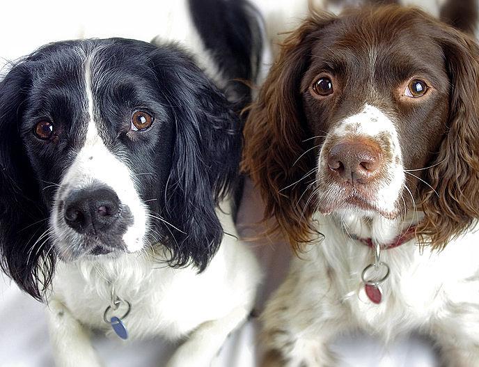 Dog Show Forum Uk