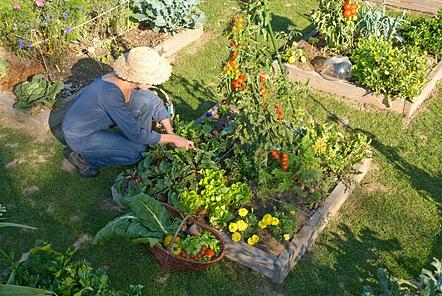 """Résultat de recherche d'images pour """"planter dans un carré potager"""""""