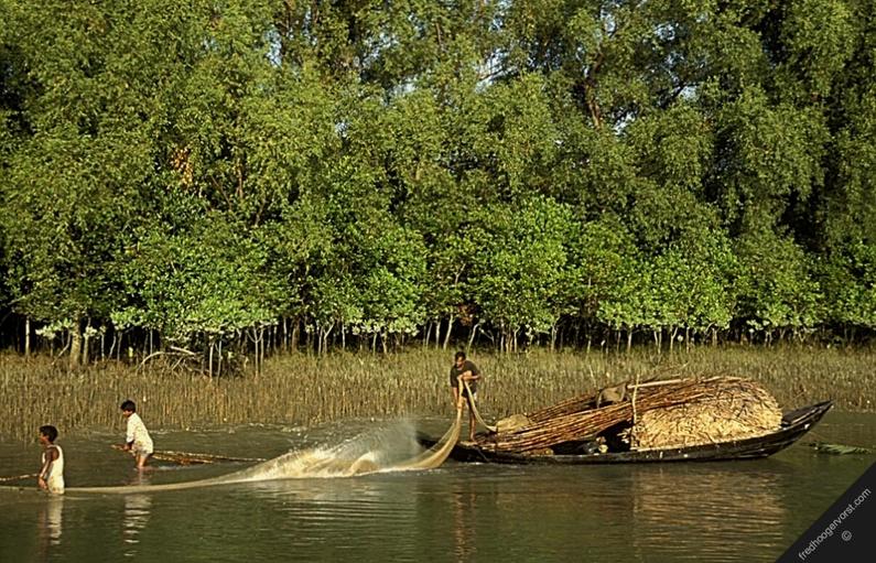 Mangrove Swamps | Wix.com