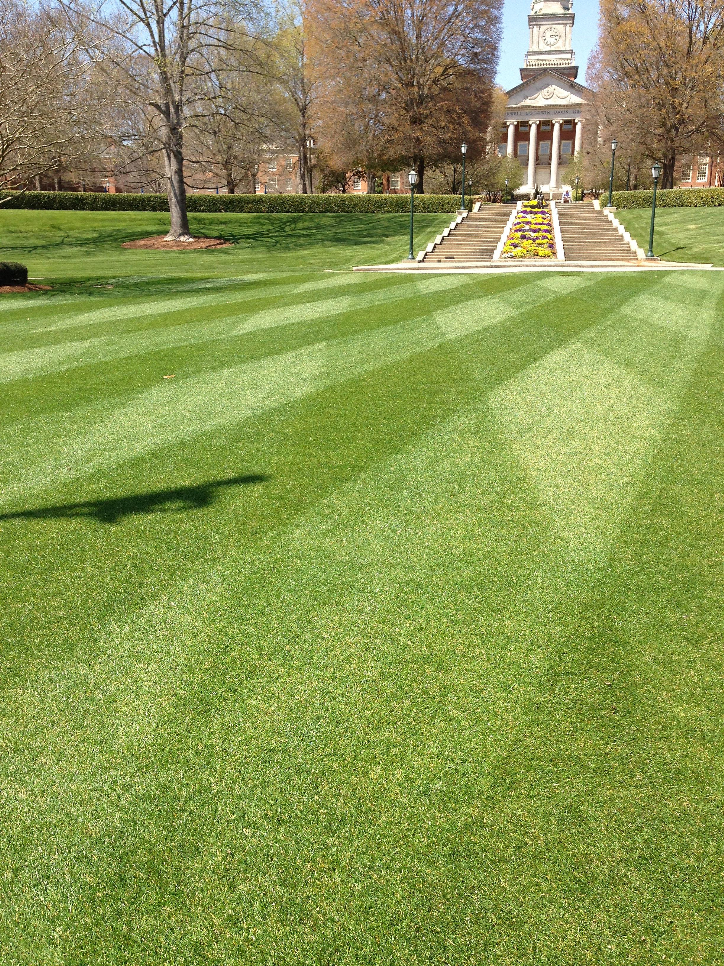 Image result for samfords grass