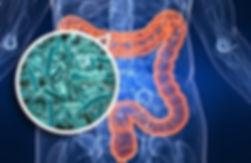 Gastrointestinal Testing - Lab Medical G