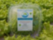 SFP Sandwich lettuce 2.jpg