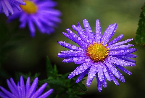 Kvetina s kvapkami