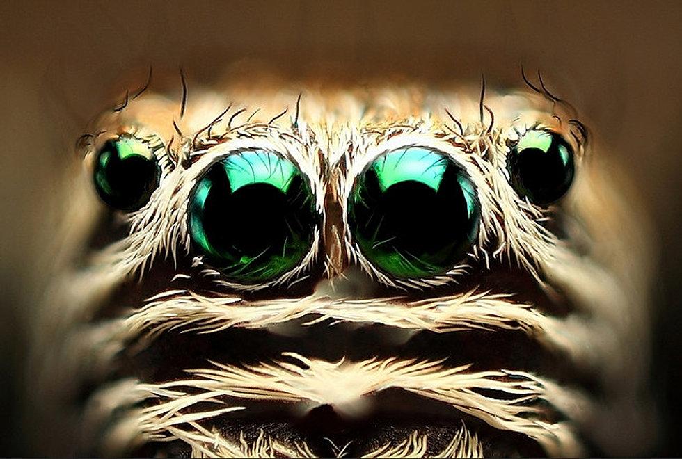 skákavka - oči