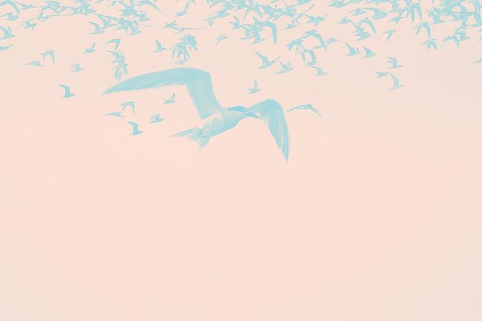 sternidae-cartaz-fechado_edited.jpg
