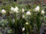 last minure tavasz 4.jpg