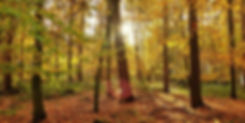 dare-to-imagine-image-edit-800x400.jpg