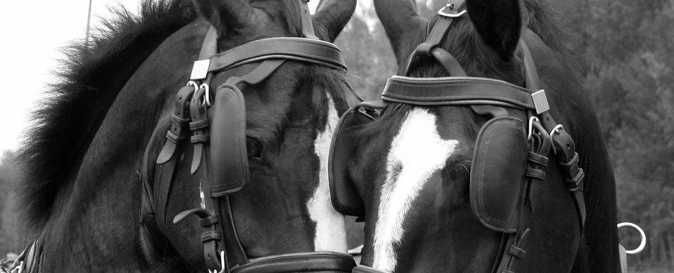 horses-406222.jpg